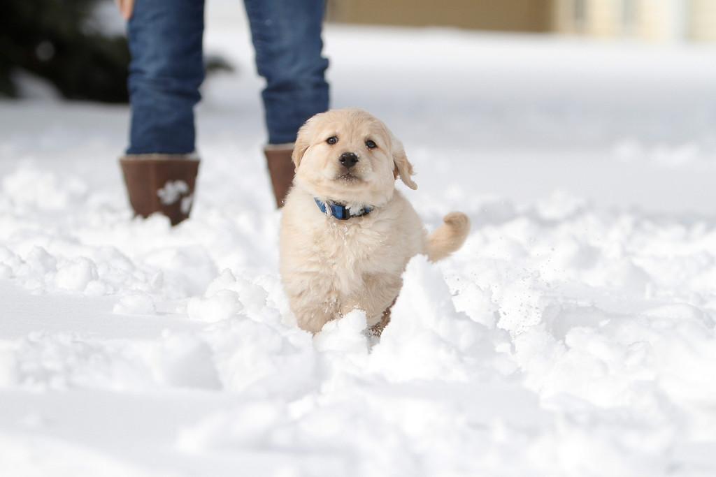 Sam the puppy 41
