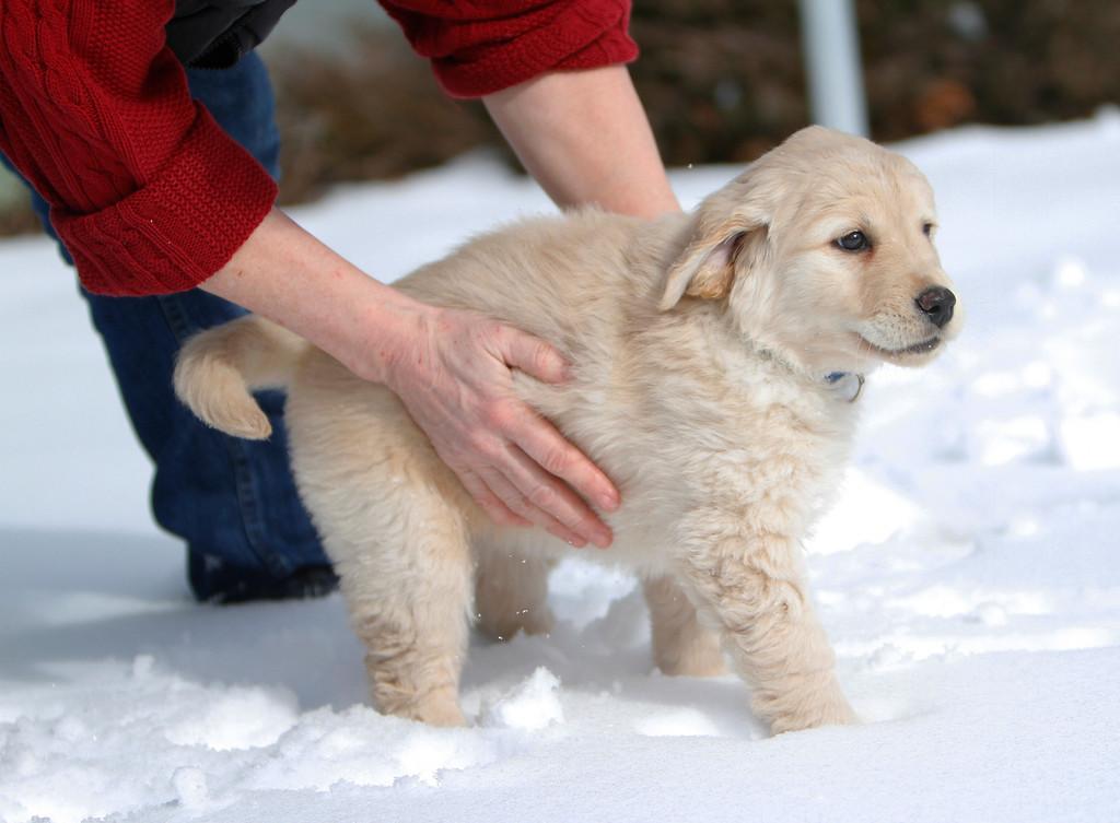 Sam the puppy 26