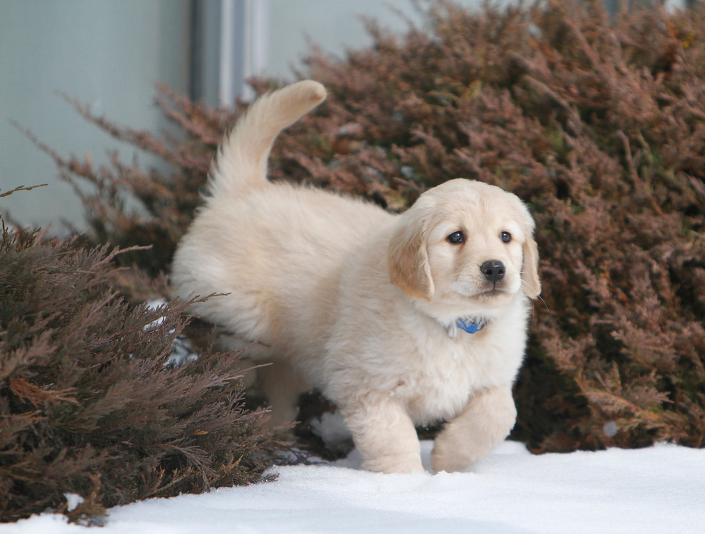 Sam the puppy 29