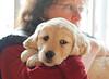 Sam the puppy 45
