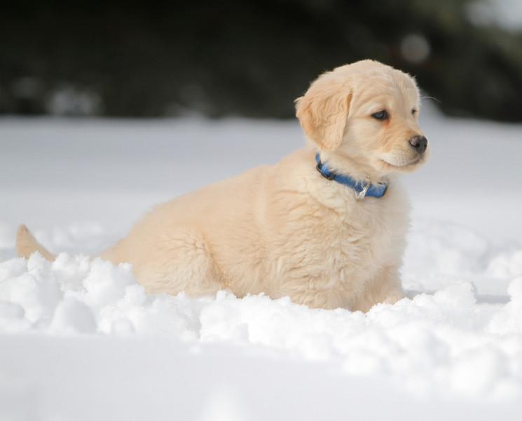 Sam the puppy 32