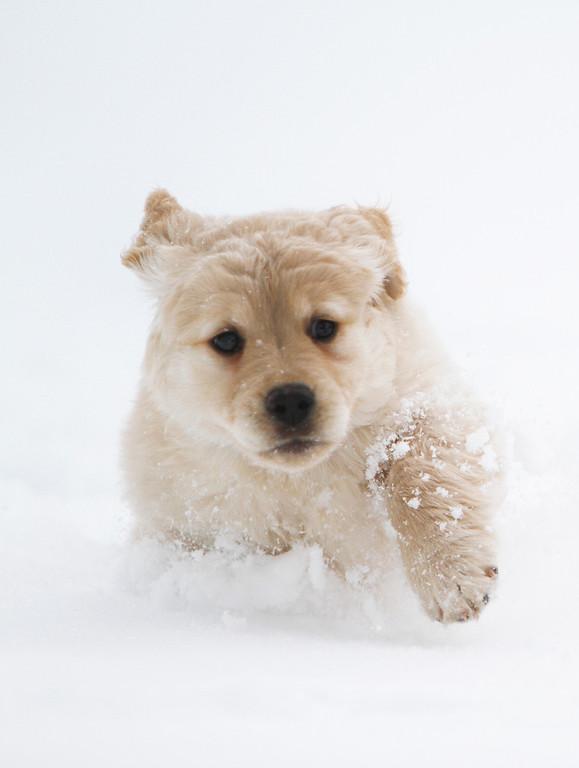 Sam the puppy 28