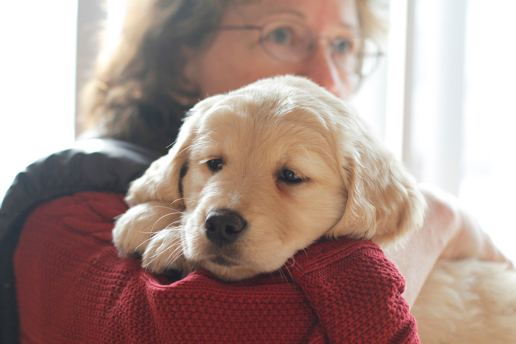 Sam the puppy 46