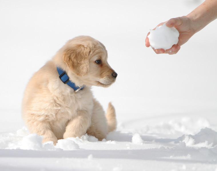 Sam the puppy 21