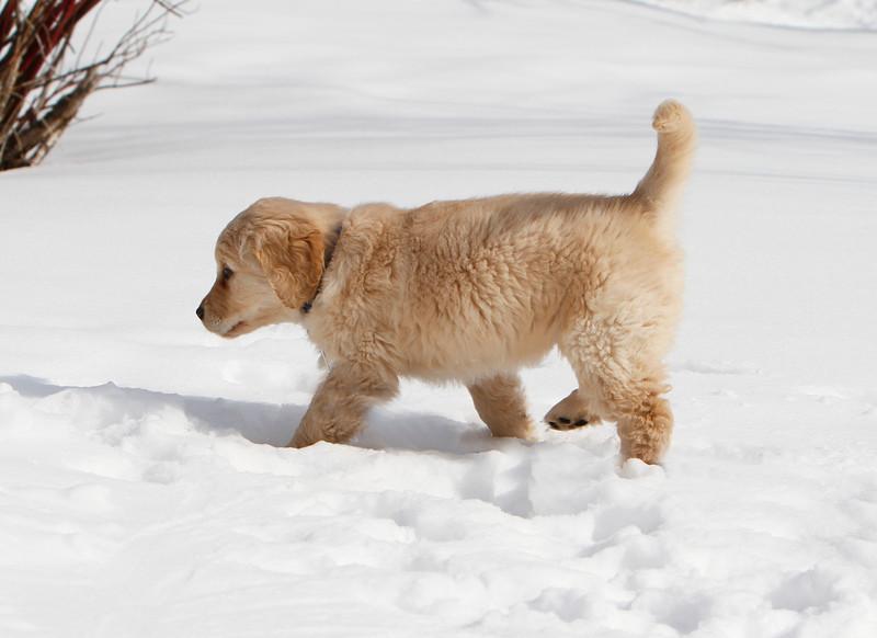 Sam the puppy 4