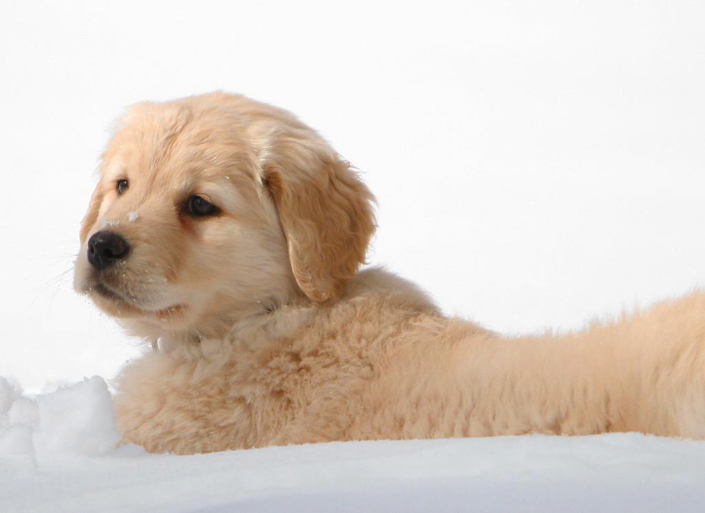 Sam the puppy 16