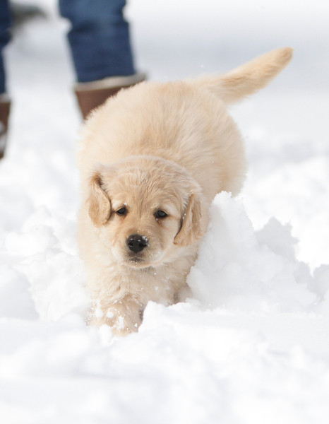 Sam the puppy 37