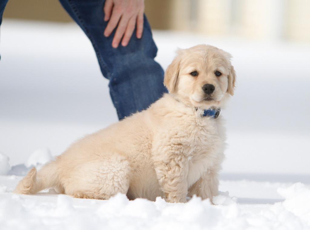 Sam the puppy 38
