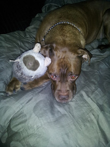 Sammy LOVES his hedgehog