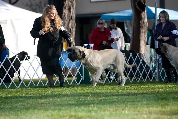 San Mateo Kennel Club 2009