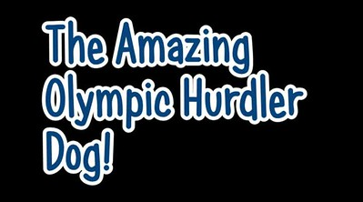 Hurdle Dog
