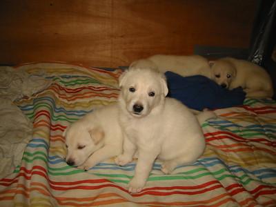 Sara puppies