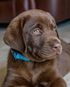 Schiach Puppy-Tucker