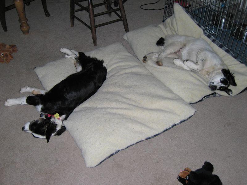May 1, 2005 - Sleepy dogs