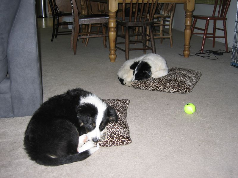 Nap time - March 28, 2005