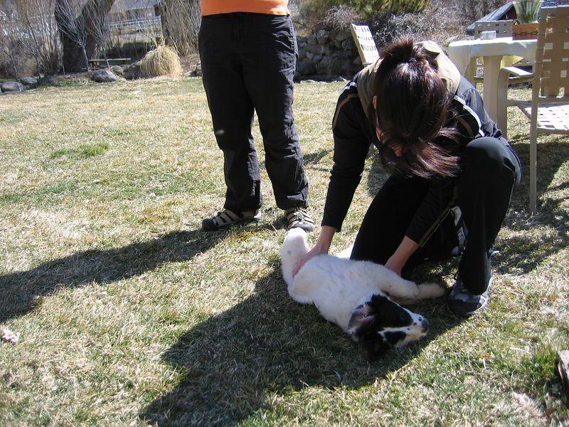 Jett gets a tummy rub from RaNae
