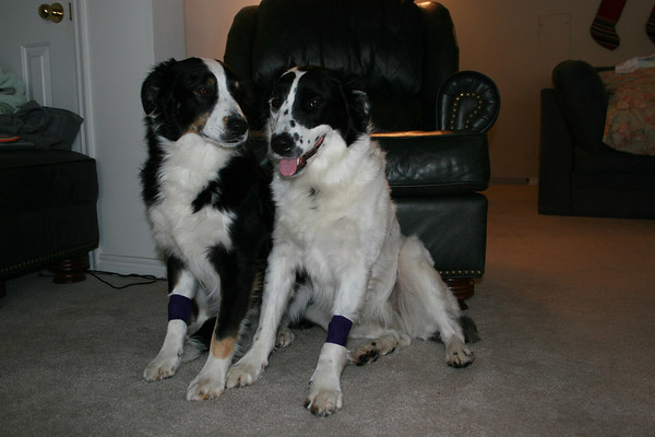 Scout and Jett in 2007