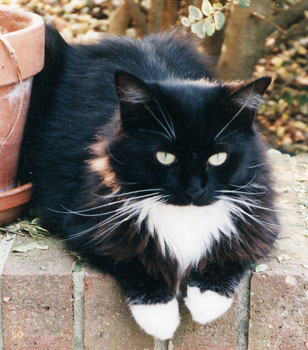 Black and white cat with paws draped over a brick
