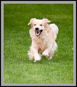 Seamus running