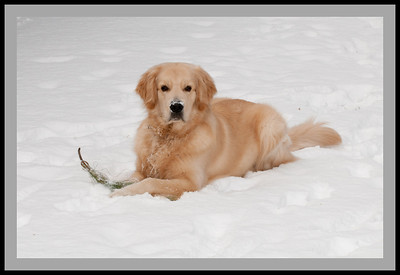 Seamus in Snow