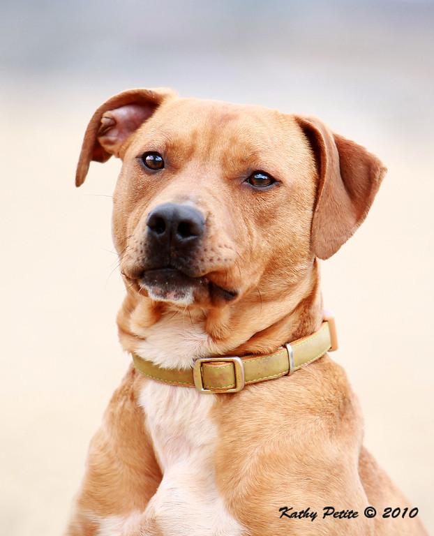 Second Chance Animal Shelter-- Carrollton