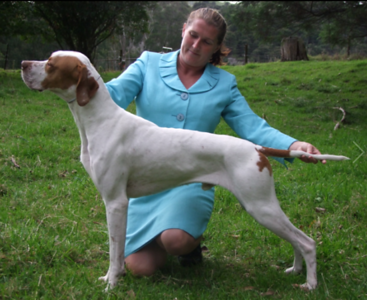 Sire: NZ CH Sgurr Winter Soldier