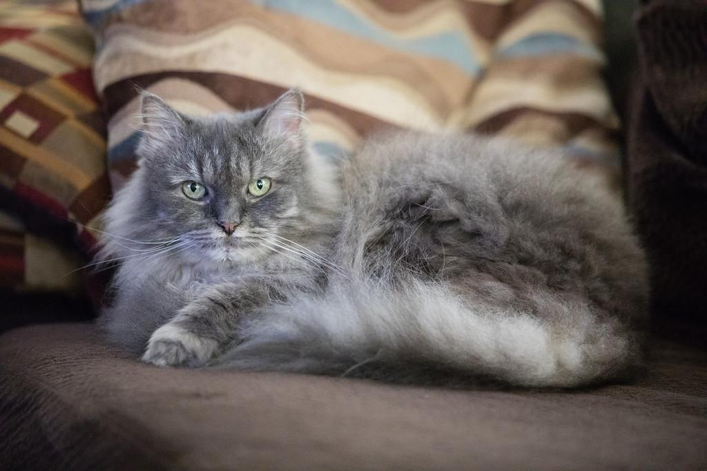 IMAGE: https://photos.smugmug.com/Pets/Shasta/i-R9VRNZ6/0/452d4d94/XL/_P9A0207-XL.jpg