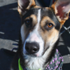 Gretchen, very sweet gal with a lot of energy!