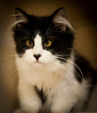 Shelter Kitties