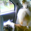 Sami standing on Angel looking out car window, taken with cell phone camera