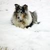 Sybil in snow.