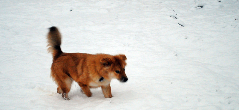 Shrek and his first experience in snow. Not fazed at all.  What a guy!