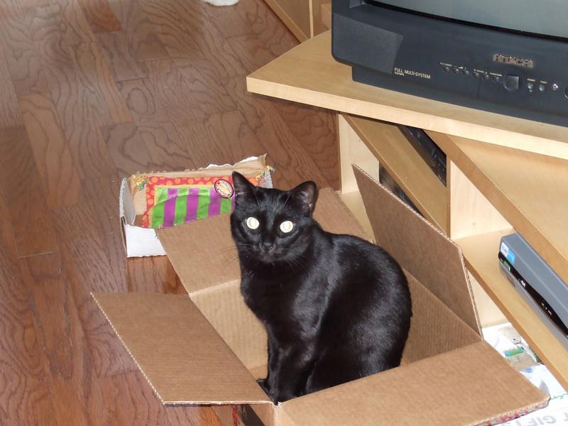 Bajan in a box