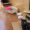 More cat and box fun