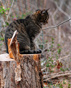 Skip : A Cat Tale