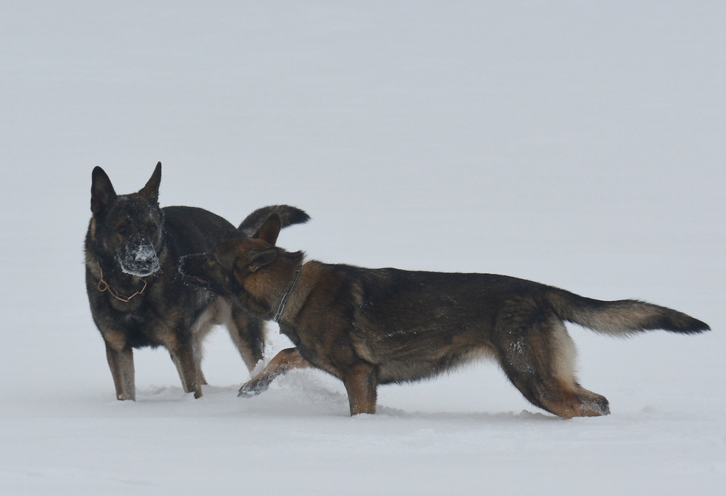 Athos & Kessy