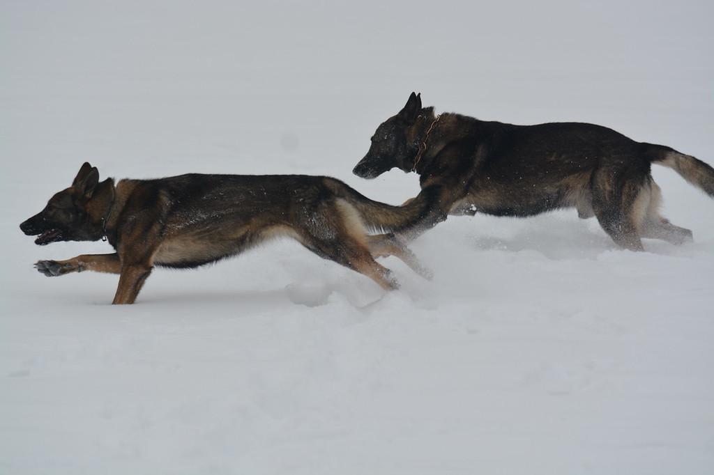 Kessy (front) & Athos