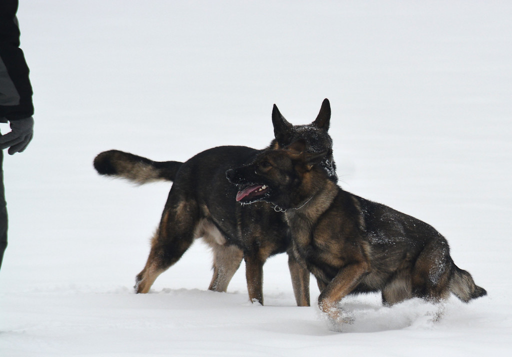 Athos & Kessy in the deep snow.