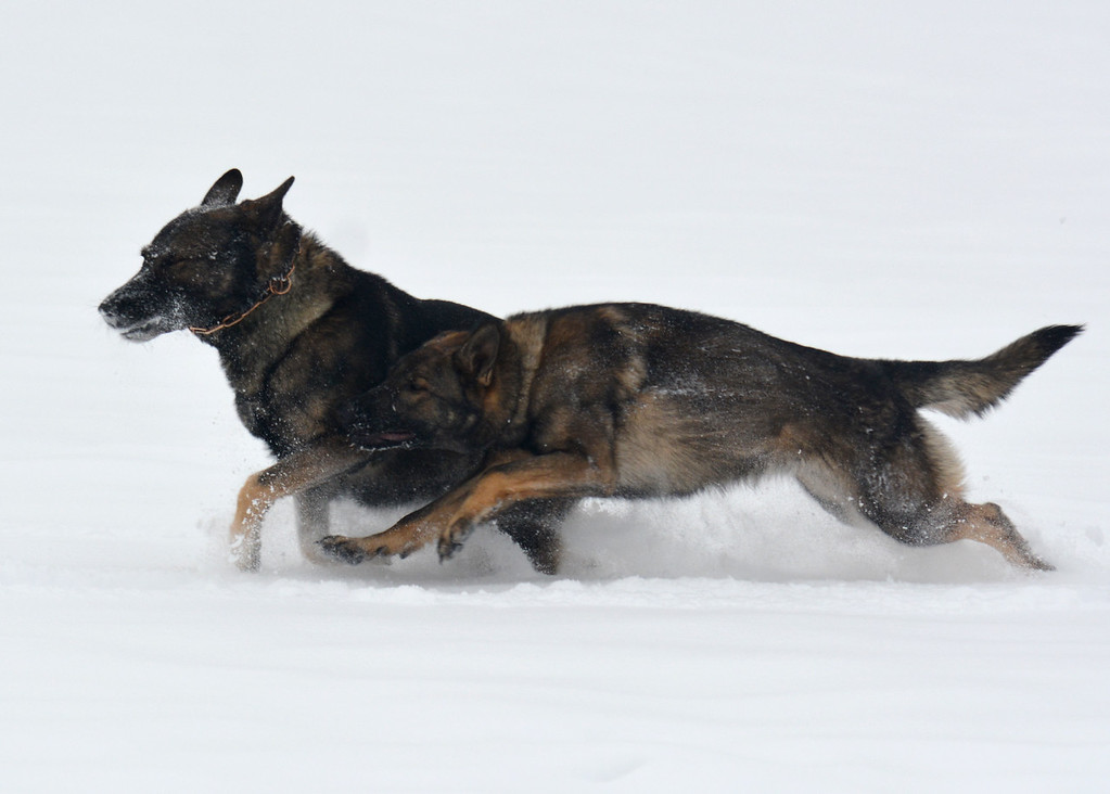 Athos & Kessy in the blowing snow