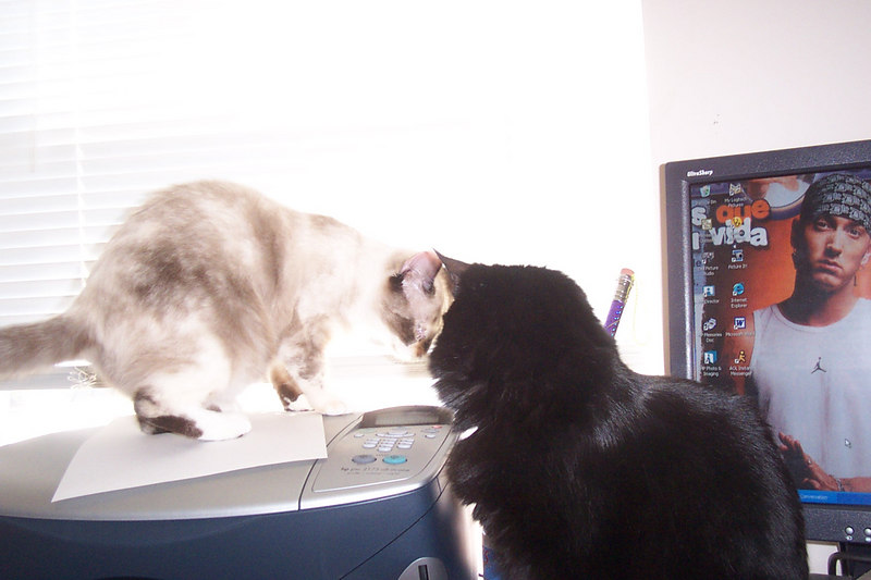 snowball and peppa on the computer table which kim was obviously on at the time.