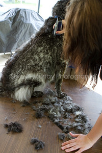 Sophie gets a shave_250710_0007
