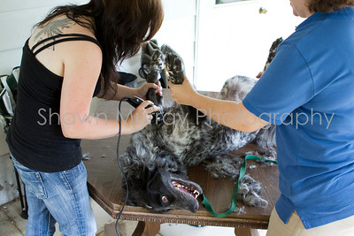 Sophie gets a shave_250710_0039
