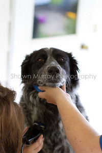 Sophie gets a shave_250710_0038