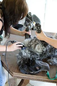 Sophie gets a shave_250710_0042