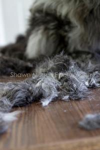 Sophie gets a shave_250710_0018