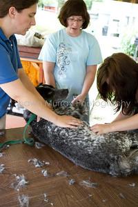 Sophie gets a shave_250710_0044