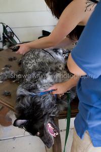 Sophie gets a shave_250710_0022