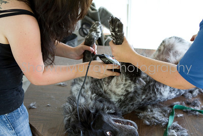Sophie gets a shave_250710_0041