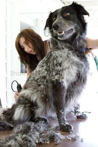 Sophie gets a shave_250710_0016