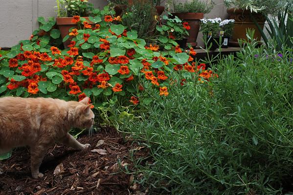 Spencer in the garden